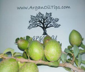 ArganOilTips Argan Oil Tips (63)